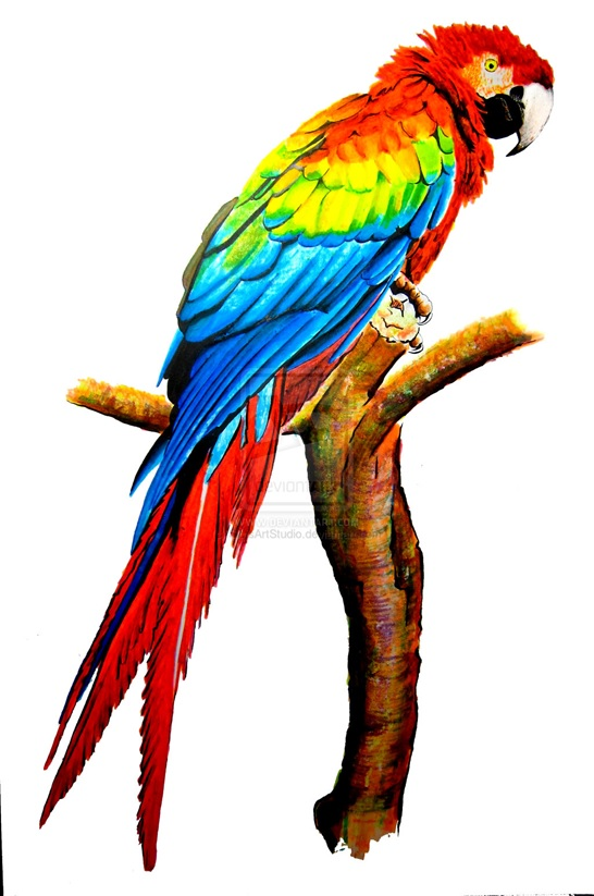 Jobsearchjungle Blog Archive The Sick Parrot Why You Should